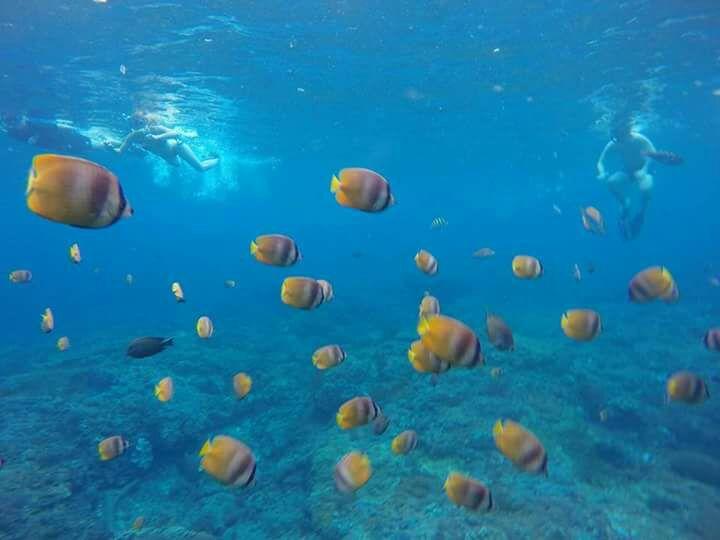 Spot snorkeling favorit di Nusa Penida