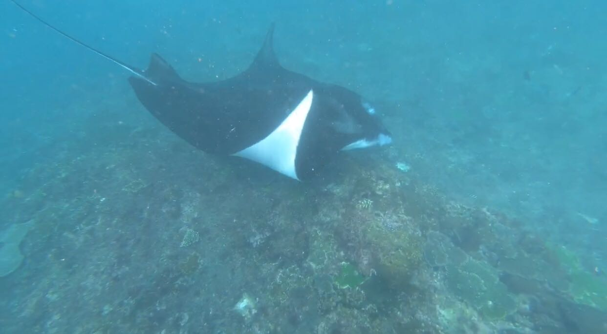Spot Favorit Snorkeling di Nusa Penida